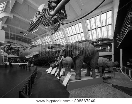 Natural History Museum In London Black And White