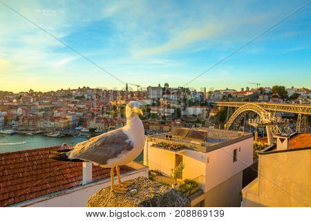 Seagull at city of Porto skyline. Freedom and travel concept. Aerial view of iconic Dom Luis I Bridge on Douro River and Ribeira waterfront. Sunset beautiful light