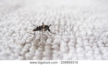 Mosquito on the fabric. It is a carrier.