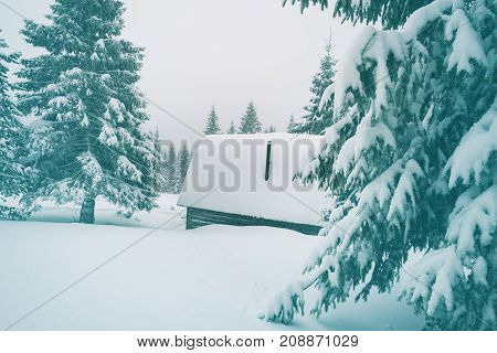 Wood Shelter, Covered With Snow