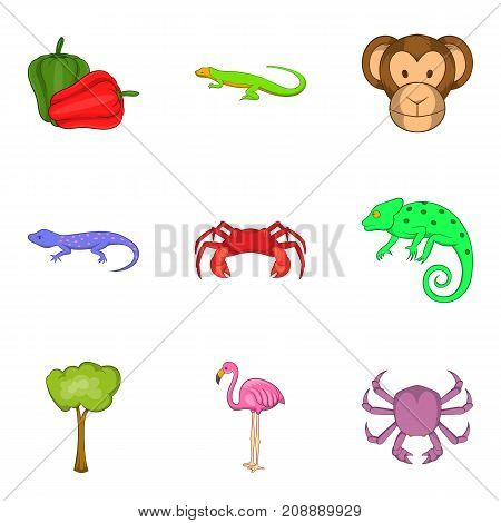 Rare animal icons set. Cartoon set of 9 rare animal vector icons for web isolated on white background