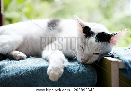A cute black and white cat sleeping on the window