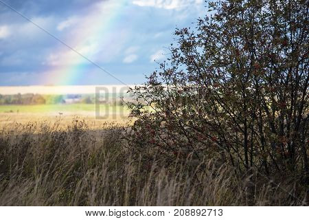 Rainbow On The Background Of An Autumn Rural Landscape, Russia