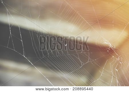 Spider web in the attic in the sun rays close up