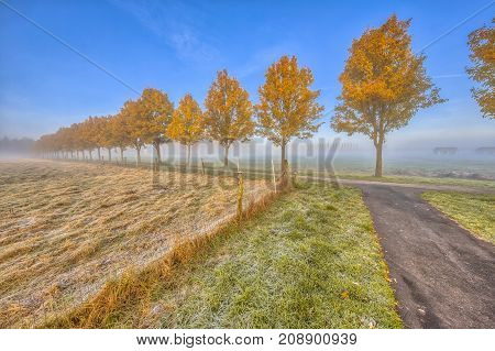 Row Of Yellow Autumn  Trees