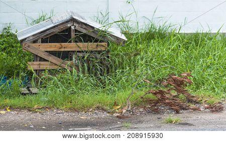 Old dog home for Poor dog on summer.
