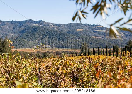 A fall landscape of Napa Valley with changing grape leaves in the valley and surrounding mountains.