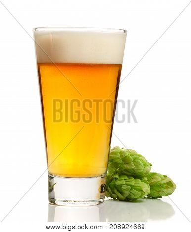 glass of beer with hop cones isolated on white background.