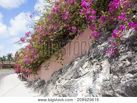 Paradise Island Drive flowers on Paradise Island vacation destination in the Bahamas.