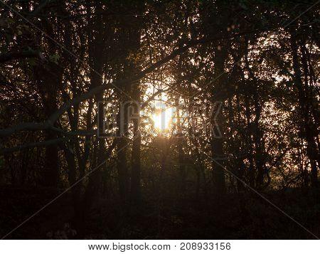Light Setting Shining Through Trees Blur Nature Leaves Autumn Dark Hazy