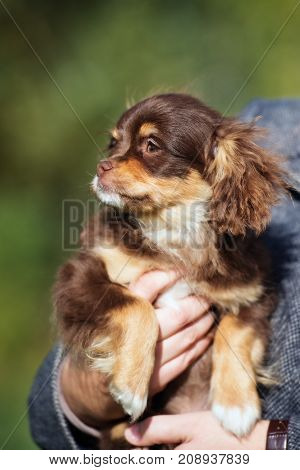 adorable mixed breed puppy portrait outdoors in summer