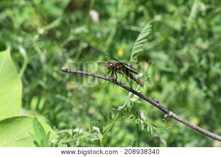 Dragonfly perched on a tree branch in a field