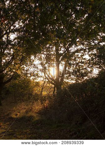 Sun Coming Through Trees Setting Leaves Autumn Yellow Golden Flow Hazy Summer
