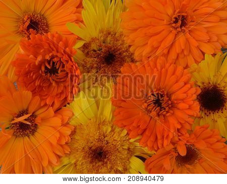 yellow orange flowers pattern texture fabric nature