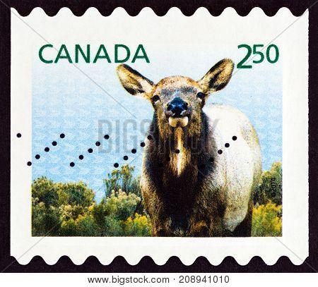 CANADA - CIRCA 2014: A stamp printed in Canada shows Elk (Cervus elaphus canadensis), circa 2014.