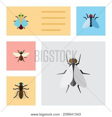Flat Icon Fly Set Of Housefly, Tiny, Mosquito And Other Vector Objects