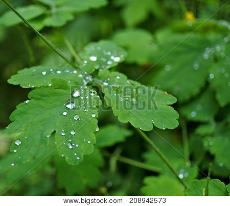 Drop Of Morning Dew On The Grass