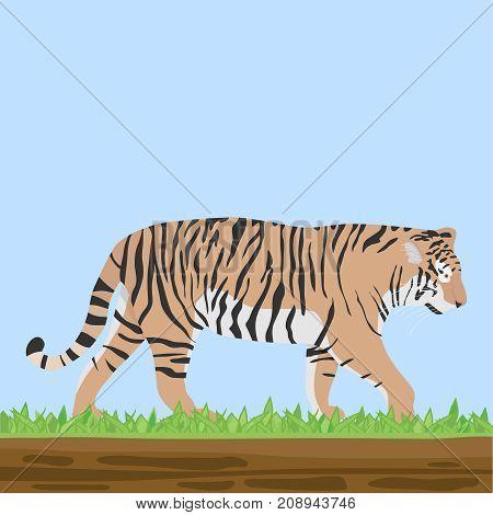 a predator, a tiger on the grass. Flat design, vector illustration, vector.