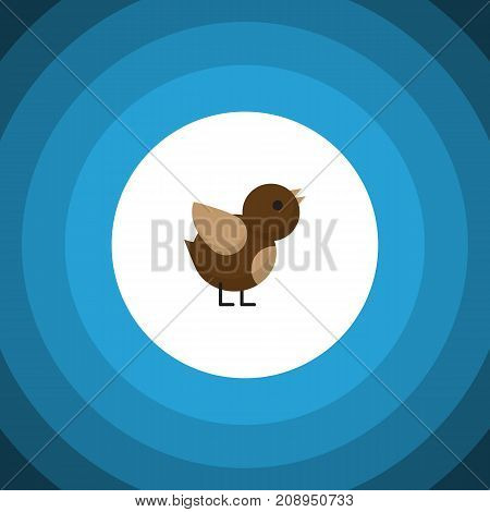 Bird Vector Element Can Be Used For Sparrow, Bird, Wing Design Concept.  Isolated Sparrow Flat Icon.