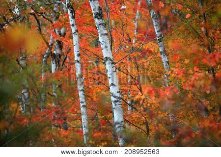 Colorful autumn tree background