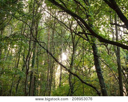 Inside Forest Up High Green Leaves Trees Branches Background