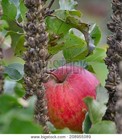 view of autumn fruits southern Bohemia Czech Republic