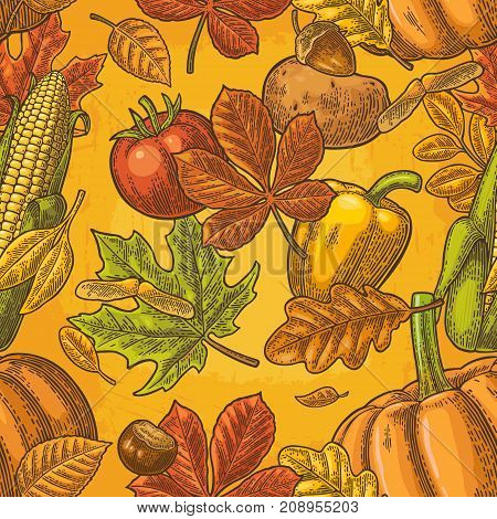 Seamless pattern for Thanksgiving Day with pumpkin, tomato, corn, pepper, leaf maple, seed chestnut. Vintage color vector hand drawn engraving illustration.