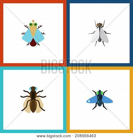 Flat Icon Housefly Set Of Mosquito, Dung, Hum And Other Vector Objects