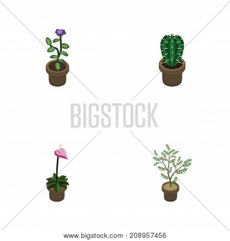 Isometric Flower Set Of Peyote, Grower, Fern And Other Vector Objects