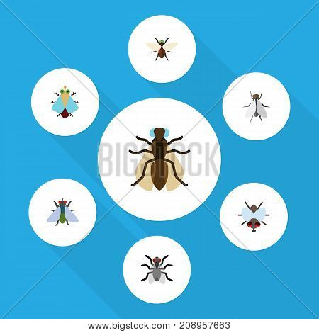 Flat Icon Buzz Set Of Buzz, Hum, Tiny And Other Vector Objects