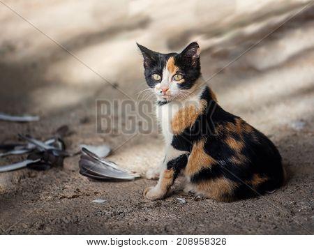 Sweet little cat hunter, caught a bird