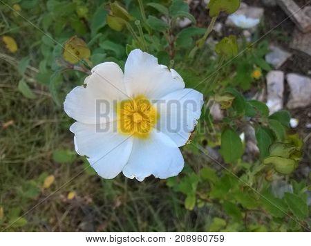 Gentle white flower on the morning sun