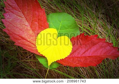 heart with wings, colored autumn foliage, close up