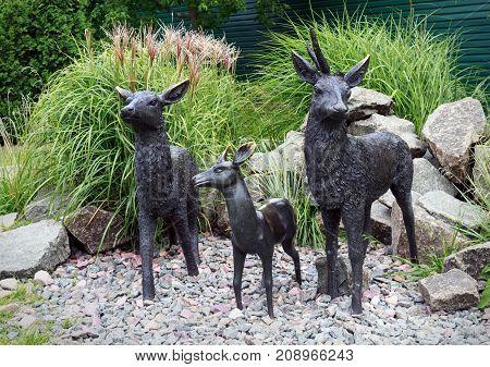 family of deer on gravel among bushes