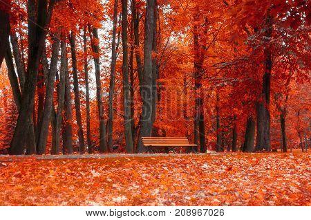 Autumn landscape. Bench under the orange autumn trees in the colorful autumn park. Cloudy autumn landscape scene of autumn park nature. Autumn trees in the park in cloudy autumn weather