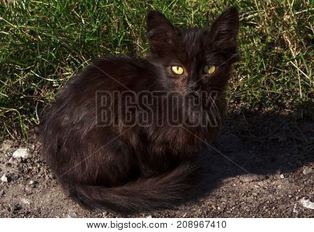 stray dirty cat is sitting in the sun