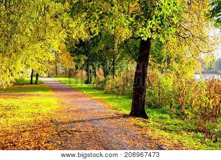 Autumn landscape. Autumn trees along the alley in sunny autumn weather. Colorful autumn landscape with autumn park alley and fallen autumn leaves covering the ground. Autumn sunny nature. Autumn park