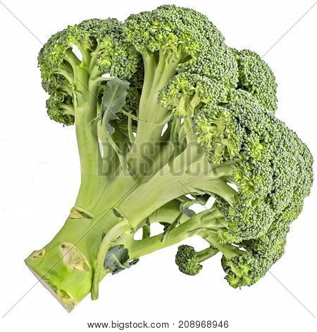 Isolated vegetables. Raw Broccoli isolated on white background with clipping path
