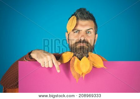 Season and autumn. Floral fashion and beauty. Man with natural yellow fall leaves beard hold paper. leaves beard at barber and hairdresser. Hipster or bearded guy in autumn on blue background.