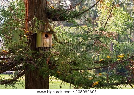 Bird house on a huge old pine tree.
