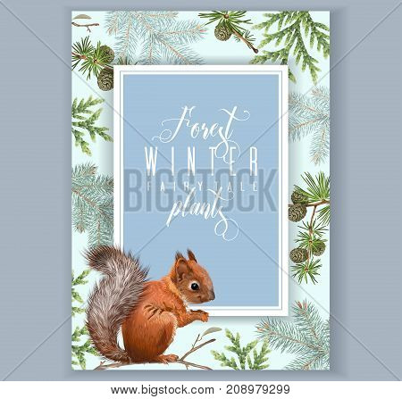 Vector vintage banner with winter forest branches and squirrel. Highly detailed winter design for greeting card, Christmas party invitation, holiday sales. Can be used for poster, web page, packaging
