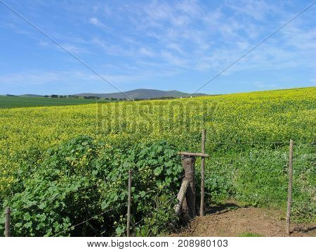 LANDSCAPE, WITH GREEN FIELDS IN THE FORE GROUND, ALL THE WAY UP TO THE MOUNTAIN IN THE BACK GROUND 01xx