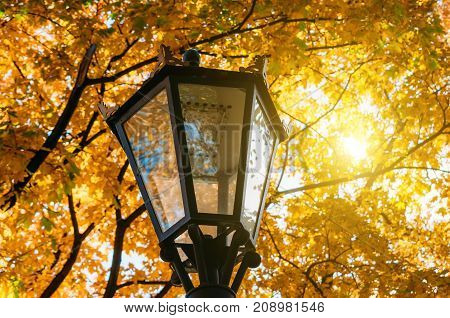 street lantern autumn among yellow autumn leaves