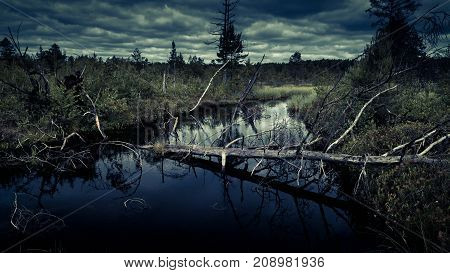 Mysterious night forest with swamp on halloween