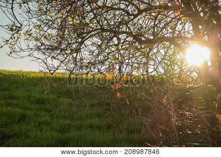 Back lit tree and grass on hillside