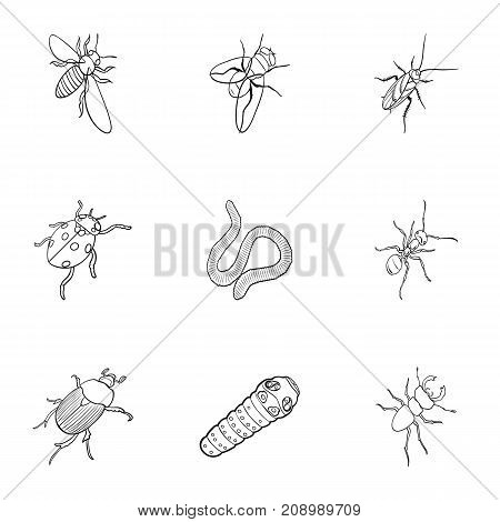 Beetle, wasp, bee, ant, fly, spider, mosquito and other insect species. Various insects set collection icons in outline style vector symbol stock isometric illustration .