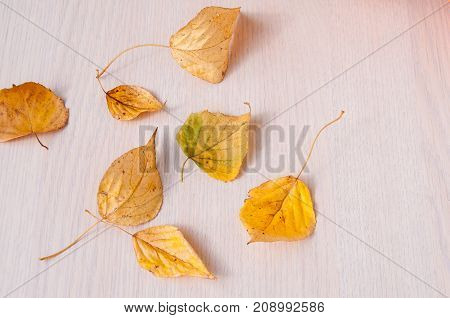 Yellow Autumn Leaves On A Beige Table