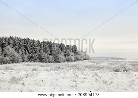 covered with white crystals, frostbitten trees in a mixed forest and bushes growing in the field. winter landscape with gray and white sky