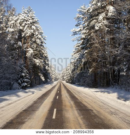 winter road in a mixed forest, covered with dirty snow. landscape with a clear day