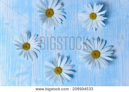 The flowers are daisies on the table